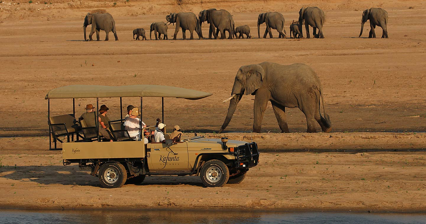 Elephants near Kafunta River Lodge in the South Luangwa National Park